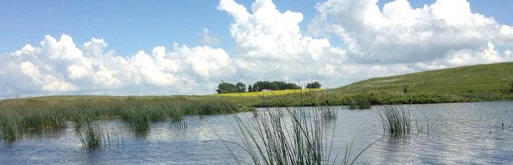 marsh and field